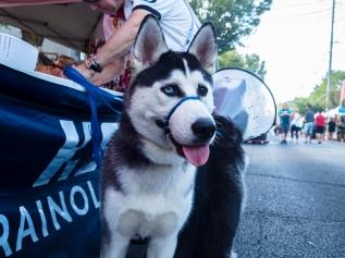 One eye blue, one eye brown, one sweet doggie.